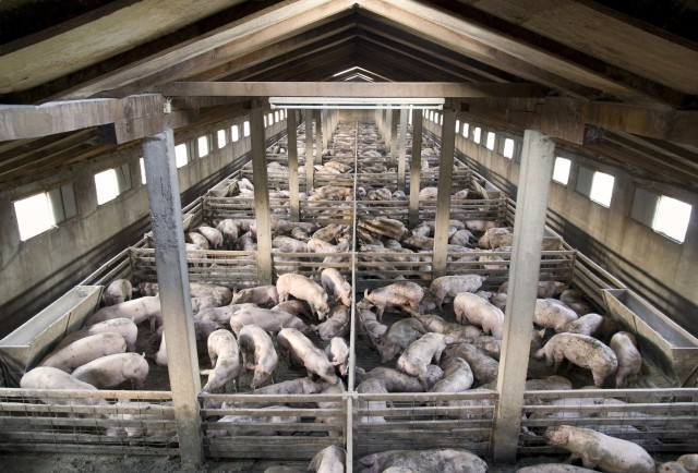 Christians Changing Career - Stop Working on the Pig Farm